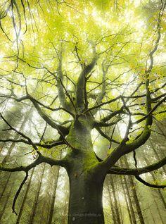 Beautiful, shining tree!