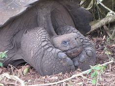 How to be over 60 and adorable!  Galapagos!