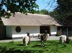 Kinderboerderij de hertenkamp Hilversum