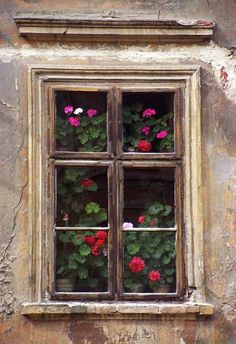 Geraniums, Levoca, Slovakia; photo by Darrell Staples