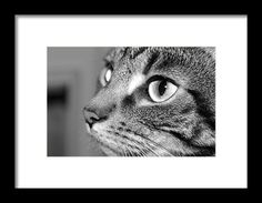 #BlackAndWhite Framed Print featuring the photograph #Tabby Cat In Black And White by Marie Symeou