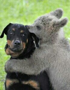 Ah, will you stop chewing on my ear please. Lol!