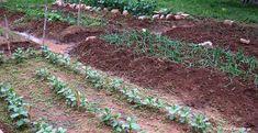 Κηπουρικό μηνολόγιο εργασιών Stepping Stones, Diy And Crafts, Home And Garden, Outdoor Decor, Nature, Plants, Gardening, Cook, House