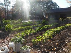 Growing for those in need, made easy! http://www.foodshedplanet.com/2012/12/growing-for-those-in-need-made-easy.html