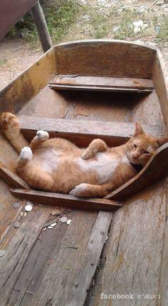 Gallery.ru / Фото #175 - Без кота и жизнь не та!) - Secunda