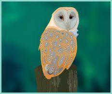 Owl #owl