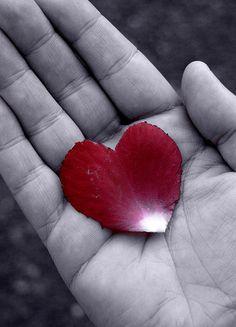 Rose petal HEART....