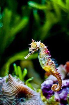 Underwater Photos ~ Dreamy Nature