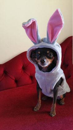 Small Dog Clothes, Bunny Halloween Costume, Dog Hoodie Secret life of Pets Inspired Chihuahua Coat Yorkie Jumper Size XS Chihuahua Halloween Costumes, Bunny Halloween Costume, Small Dog Costumes, Pet Costumes, Small Dog Clothes, Pet Clothes, Chihuahua Clothes, Yorkie, Dog Pattern