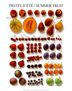 Summer Fruit Poster at AllPosters.com
