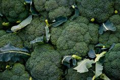 Broccoli - Good for Zone 5. Can grow in Spring and Fall. For spring plantings, direct sow outdoors (or transplant seedlings) 2 to 3 weeks before last spring frost date. For fall plantings, direct sow seeds outdoors 85 to 100 days before your average first fall frost.