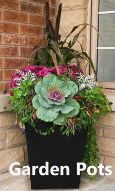 Fall container gardening flowers ornamental cabbage ornamental grasses pansie Fall container gardening flowers ornamental cabbage ornamental grasses pansies mums WELCOME. Ornamental Cabbage, Ornamental Grasses, Fall Planters, Outdoor Planters, Indoor Outdoor, Autumn Planter Ideas, Outdoor Flower Pots, Flower Planters, Diy Gardening