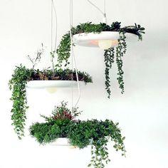 Plant a garden pendant light