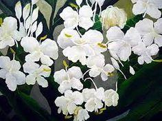 「野薑花」的圖片搜尋結果