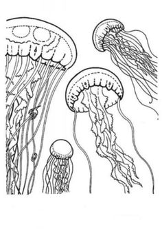 Coloring Pages of Jellyfish for Kids