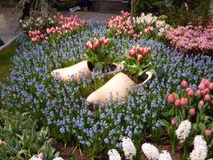 I like the wooden shoe idea!!!  Biodiverse Gardens: March 2013