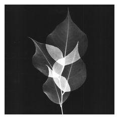 Dancing Leaves Black and White Art Print