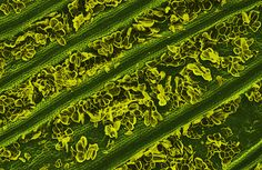 Symmetry of whole foods under a microscope verses processed foods: Pop-Tarts Like You've Never Seen Them Before, The Healthy Home Economist