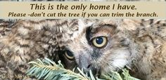 Sign the petition to urge American Transmission Co. to trim trees by their powerlines instead of clearcutting a wildlife sanctuary (85094 signatures on petition)