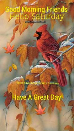 Good Morning Friends, Hello Saturday good morning saturday saturday quotes good…