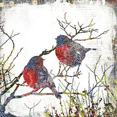 Buy Almanac A Pretty Pair Christmas Cards, Pack of 8 Online at johnlewis.com