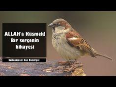 ALLAH'a Küsen Bir Serçenin Hikayesi! BÜYÜK İBRET (Can Demiryel) - YouTube Allah, Youtube, Instagram, God, Allah Islam