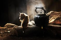 Puppy and kettle by Juboo Alive on 500px