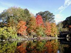 Autumnal Blaze in Ohio