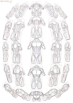 Anatomy Drawing Tutorial male body in perspective Anatomy Sketches, Art Sketches, Art Drawings, Drawing Art, Male Drawing, Body Sketches, Comic Drawing, Gesture Drawing, Sketch Drawing