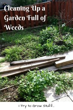 Cleaning up garden of weeds #gardening #project