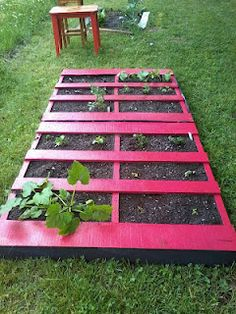start a new garden with some color...use pallets that you can get free at different places...dont use chemically treated pallets though...enjoy the fruits of your labor