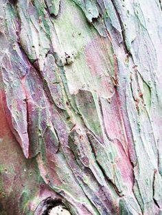 TREE ABSTRACT | PATTERNITY — Patternity