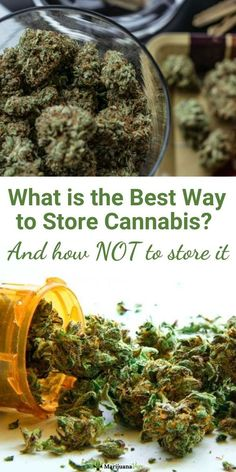 What is the best way to store cannabis? We discuss how and where not to store your cannabis at The Marijuana Vape. Marijuana Facts, Medical Marijuana, Vaping For Beginners, Salve Recipes, Cannabis Plant, Alternative Health, Healthy Alternatives, Health And Wellbeing, Natural Medicine