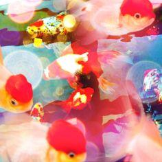 [写真]話題沸騰中! どんな写真も蜷川実花さん風にできちゃうiPhoneアプリ「cameran」を使ってみた! マジで蜷川ワールドになってスゲエ!!|ウーマンエキサイト ニュース