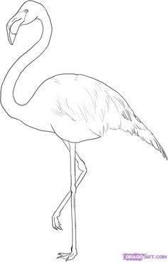 Flamingo Outline | how to draw a greater flamingo step 5