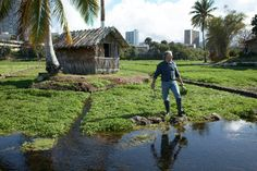 Chef Mavro gathering watercress at Sumida Farms in Aiea, Oahu