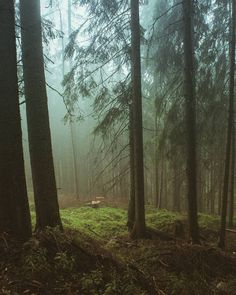 "ladymantheniel: ""Dark forest Spomienka na Vysoké Tatry 🌲 #forest #infairytale #inforest #innature #naturephotography #nature #walkinforest🌳 #walkinnature #trees #slovakiaphotographer #slovakianature🌄 #greenforest #magicphoto #magicforest """