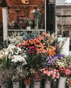 Almost too pretty to shop. A little fantasy courtesy of My Flower, Fresh Flowers, Beautiful Flowers, Ocean Flowers, Cactus Flower, Exotic Flowers, Purple Flowers, Wild Flowers, Spring Aesthetic
