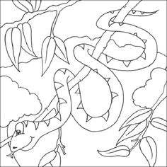 lizard and snake coloring pages