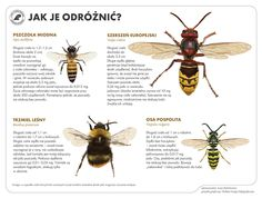 Juni, Kids Learning, Linux, Activities For Kids, Insects, Bee, Education, Lasy, Montessori