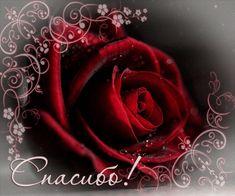 Анимация: Спасибо и роза из категории Благодарность, спасибо...