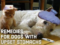 Tips for curing your dog's upset stomach.