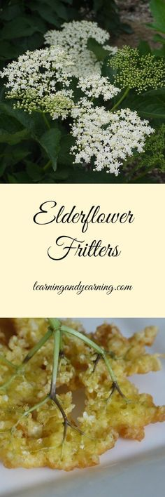 If you're looking for a great treat from a foraged flower, try crispy, crunchy, elderflower fritters!