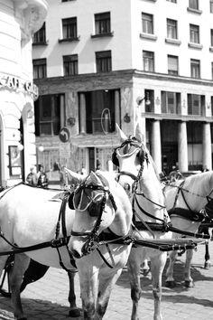 Fiaker Beautiful Sites, Vienna, Horses, City, Animals, Animales, Animaux, Cities, Animal