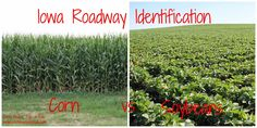 Corn, Beans, Pigs and Kids: Iowa Roadway Identification - Corn and Soybeans