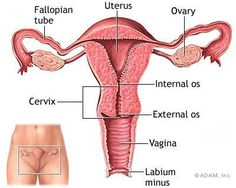 Major Signs of Fallopian Tube Infection in Women