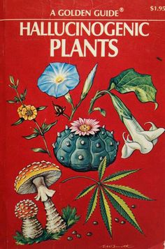 Let's explore Botany, Kids! The Golden Guide to Hallucinogenic Plants Illustration Inspiration, Illustration Art Nouveau, Botanical Illustration, William S Burroughs, Psy Art, Psychedelic Art, Graphic, Trippy, Art Inspo