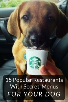 Don't leave your dog at home - take him/her to a dog restaurant instead! You can bring your dogs and puppies and feed them treats at these 15 restaurants with dog friendly menus! #dogs #puppies #pets #doghealth #dogfood