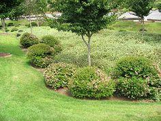 Bioretention/Rain Garden--small tree and shrubs