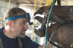 About dental care for horses:  Most horse owners, and even some vets, do not realize the critical importance of proper dental care for horses. Annual dental work can help prevent colic (poorly chewed food is harder to digest, more likely to cause an impaction) and training and behavior problems (you might rear or buck, too, if you felt a stabbing pain every time someone pulled on the reins). It saves the horse owner money on feed (horses can get more calories out of properly-chewed feed)…